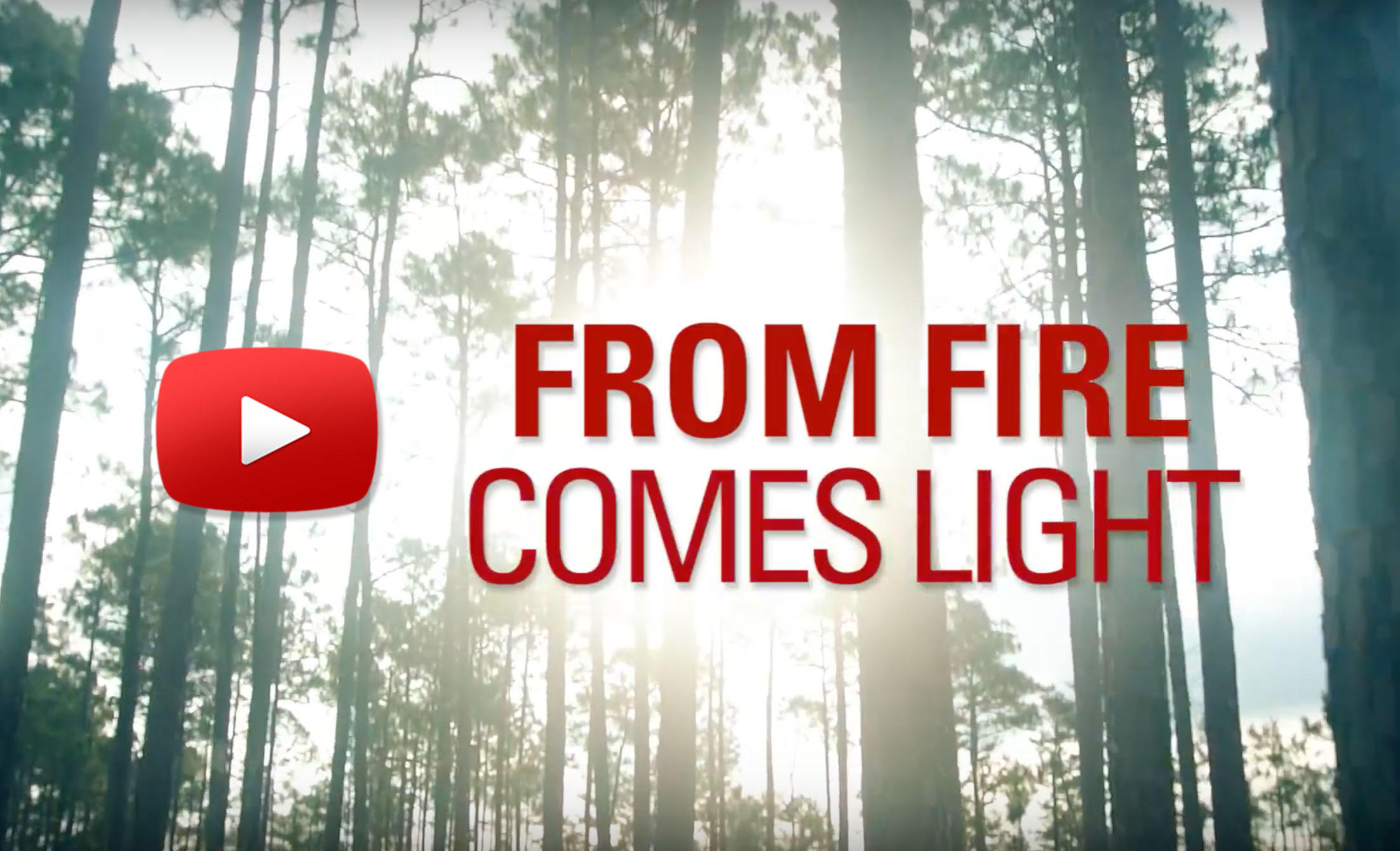 From Fire Comes Light