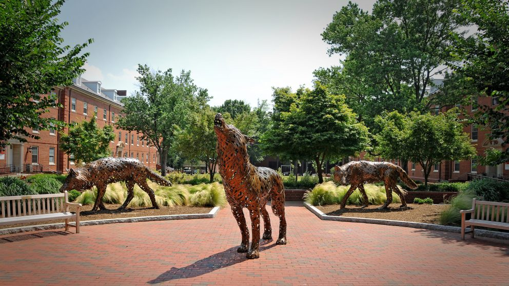 Copper wolves on central campus.