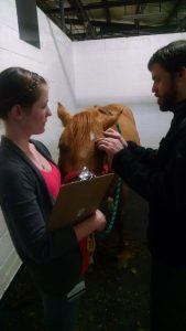 Photo of DVM students with a horse in VMC 949