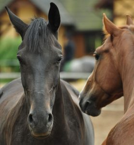 Photo of horses in VMC 949