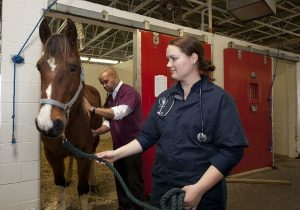 Photo of DVM students and a horse in a barn