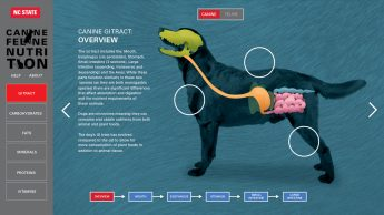 Screenshot of the Canine GI tract overview from the web tool created for ANS 590