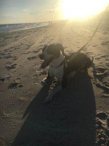 Sherry's dog, Sadie, at the beach.