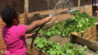 A child waters a fruit and vegetable garden with a hose.