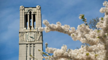Belltower framed by white blooms on a tree in spring.
